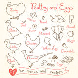 Set drawings of poultry and egg for design menus, recipes. Poultry meat chicken, turkey, goose, duck, quail, pheasant. Set drawings of poultry and egg for Stock Photography