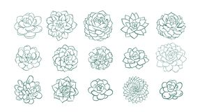 Set of and drawn line succulent plant isolated on white background. Vector illustration. Set of and drawn line succulent plant isolated on white background royalty free illustration