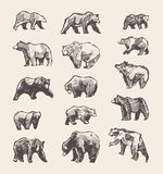 Set drawn wild beers, vector illustration, sketch Royalty Free Stock Photo
