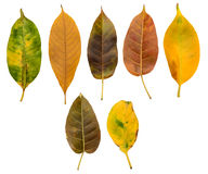 Set of dry and autumn leaves Stock Photography