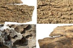 Set of dry bark Royalty Free Stock Image