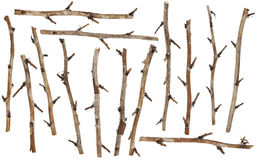 Set  of the  dry branches Royalty Free Stock Images