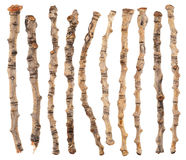 Set of dry branches Stock Images