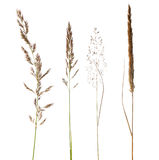 Set of dry grass isoalated on white Royalty Free Stock Image