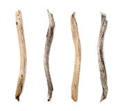 Set of dry tree branch Stock Image