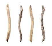 Set of dry tree branch Stock Image