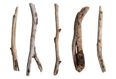 Set of dry tree branch Royalty Free Stock Image