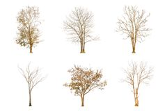 Set of dry tree shape and Tree branch on white background for isolated Royalty Free Stock Image