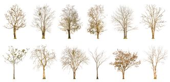Set of dry tree shape and Tree branch on white background for isolated Stock Image