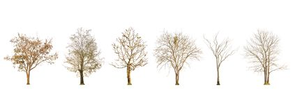 Set of dry tree shape and Tree branch on white background for isolated Royalty Free Stock Images