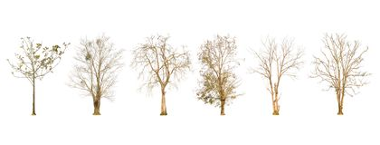 Set of dry tree shape and Tree branch on white background for isolated Royalty Free Stock Photography