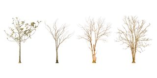 Set of dry tree shape and Tree branch on white background for isolated Royalty Free Stock Photos
