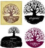 Set Drzewni symbole Fotografia Royalty Free