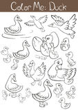 The set of ducks and ducklings. Stock Image