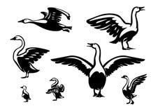 Set of ducks. Stock Photos