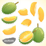 Set of durian in various styles format vector illustration