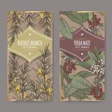 Set dwa kolor etykietki z Rooibos Aspalathus aka linearis, Yerba szturmanu aka ostrokrzewu paraguariensis i rozgałęzia się ilustracji