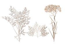 Set dzicy susi naciskający kwiaty i liście Zdjęcie Stock