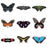 Set dziewięć egzotycznych motyli Zdjęcia Royalty Free