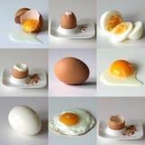 Set dziewięć jajek w różnorodnej sytuaci Obrazy Stock