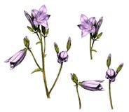 Set dzwon gałąź kwiaty Ilustracji