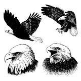 Set of eagle doodle hand drawn Royalty Free Stock Images