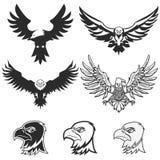 Set of eagles. Design elements for logo, label, emblem, badge te Royalty Free Stock Photography