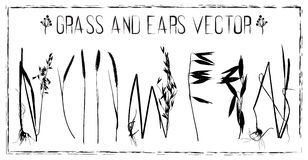 Set of ears and grass vector Stock Images
