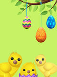 Set of Easter Chicken and Suspended Color Eggs. Isolated on green. Three multicolor balls tied on tree branch. One poult sits in purple shell. Vector Royalty Free Stock Photos