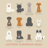 Set of eastern european dogs Stock Photography