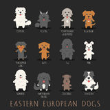 Set of eastern european dogs Stock Images
