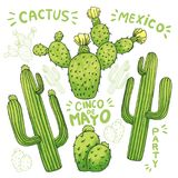Set of edible cactus or cacti for cinco de mayo. Set of mexican cactus with spines or thorns and flowers as banner for cinco de mayo holiday or celebration Stock Image
