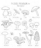 Set of edible mushrooms with titles on white background. Royalty Free Stock Photos
