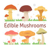 Set edible mushrooms vector illustration. different kinds of mushroom Royalty Free Stock Photos