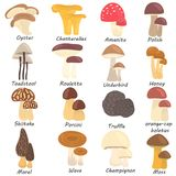 Set of edible and poison mushrooms color flat icons. Set of edible and poison mushrooms color icons Stock Photos