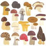 Set of edible and poison mushrooms color flat icons. Set of edible and poison mushrooms color icons Royalty Free Stock Photography