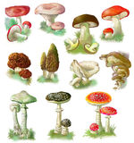Set of edible and poisonous mushrooms on the white background. Illustration drawing on computer by graphic tablet Royalty Free Stock Photography