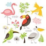 Set egzotyczni ptaki ilustracji