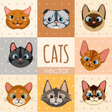 Set of eight colorful cartoon cat faces Royalty Free Stock Images
