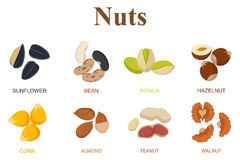 Set of eight different types nuts on a white background Royalty Free Stock Image