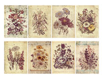 Set of eight shabby vintage floral cards with textured layers and text. vector illustration