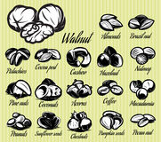 Set of eighteen stylish vector templates of nuts for menu Stock Photos