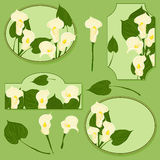 Set of elements with calla flowers Stock Photo