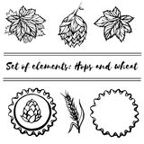 Set of elements - Hops and wheat Royalty Free Stock Images