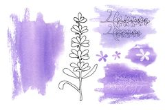 Set of elements from lilac purple spots and lavender flowers isolated on a white background. Handmade watercolor illustration for