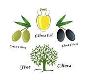 Set of elements of olive oil. Branch with green olives. The set of elements of olive oil. Green and black olives, Bottle of oil, the Olive tree. Vector Royalty Free Stock Photography