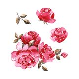 Set of elements, roses greeting card. Watercolor illustration. Set of elements, roses greeting card. Watercolor illustration royalty free illustration