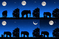 Set elephant living at night Stock Photo