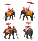 Set of elephant for tourists ride tour of the ancient city in Th. Ailand isolated on white background with clipping path Royalty Free Stock Photography