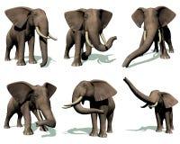 Set of elephants Royalty Free Stock Images